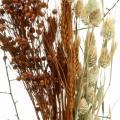 Wildblumen-Bouquet Natur, Orange 25–60cm 65g
