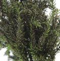Erikamoos grün 750gr