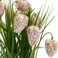 Künstliche Schachbrettblume im Topf, Frühlingsblume Fritillaria, Seidenblume Rot-Weiß