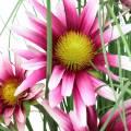Gras mit Echinacea künstlich im Topf Pink 63cm