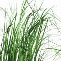 Riedgras im Topf künstlich Grün 65cm
