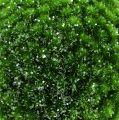 Mooskugel Grün mit Glimmer Ø15cm