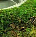 Pflanzenschale Moos Zweige Ø20cm