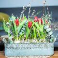 Pflanzkasten Metall mit Griffen Pflanzgefäß Vintage Blumenkasten 2er-Set