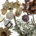 Trockenfloristik-Bastelset Advent Zapfen und Moos Weiß gewaschen 150g