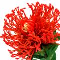 Protea Künstlich Rot 73cm
