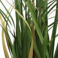 Riedgras im Topf Künstliche Topfpflanze Creme, Grün 79cm