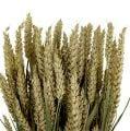 Weizenbund Natur 1St  Deko-Weizen