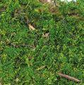 Plattenmoos grün 2,5kg
